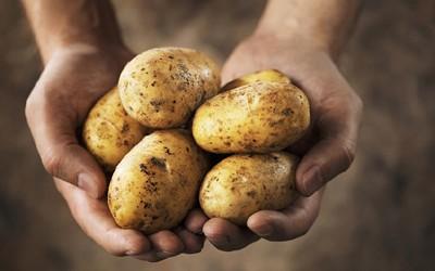 Kartoffeln - Direkt vom Erzeuger